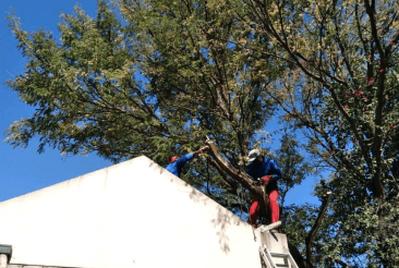 Boomsloping / Tree Felling
